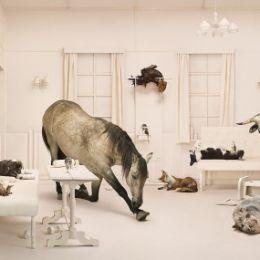 Frieke Janssens 完美彩票网摄影作品欣赏